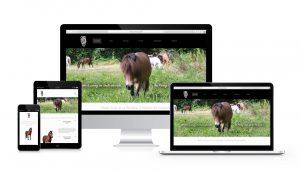 Création site internet Fox Webdesign Bordeaux - Poney club la pouyade